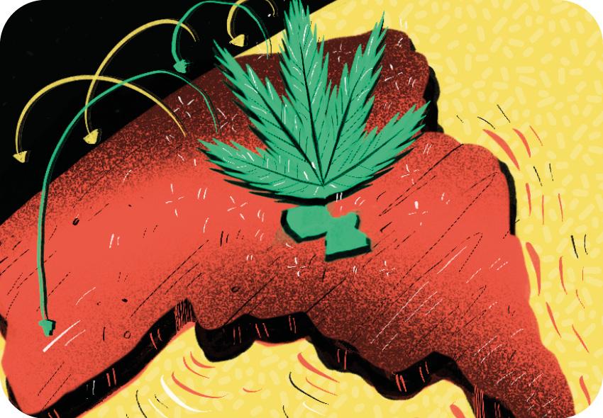 CAP014 2 Brasiguaio: Como o Brasil fez do Paraguai o maior produtor de cannabis