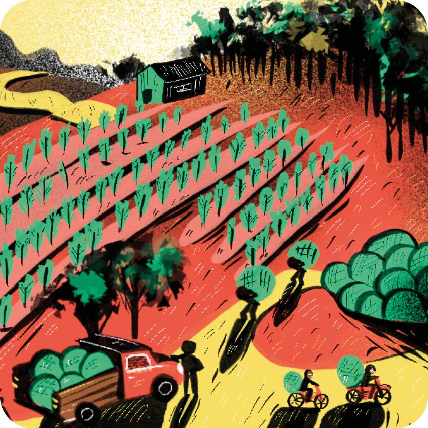 CAP015 Brasiguaio: Como o Brasil fez do Paraguai o maior produtor de cannabis