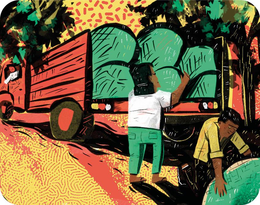 CAP017 1 Brasiguaio: Como o Brasil fez do Paraguai o maior produtor de cannabis