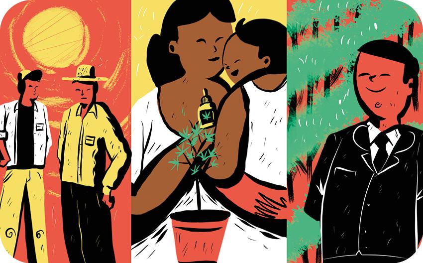 Camponeses, pacientes e mães e empresários em torno da cannabis.